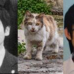 岡庭由征の生い立ち「猫を虐待し少女を切りつけ欲求を満たす第二の酒鬼薔薇聖斗だった」